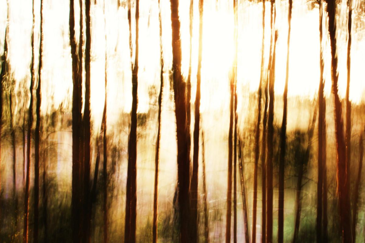 Bäume in der Sonne - lange Belichtungszeit
