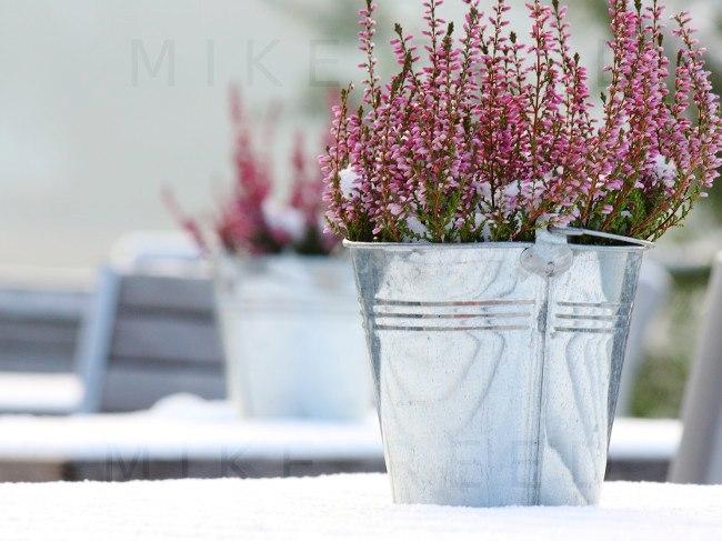 Blumentopf im Winter