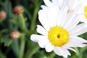 Blume, aufgenommen mit einer Canon EOS 6D mit eingestellter ISO 3200