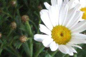 Blume, aufgenommen mit einer Canon IXUS 230 HD mit eingestellter ISO 3200