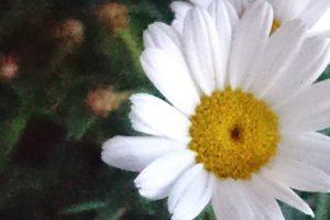 Blume, aufgenommen mit dem Handy Sony XPERIA Z5 Compact mit eingestellter ISO 3200